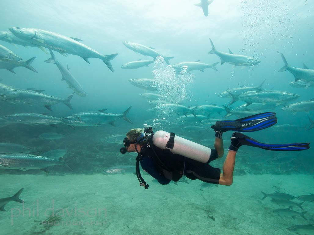 Mexican Caribbean PADI Scuba Diver Course in Xcalak