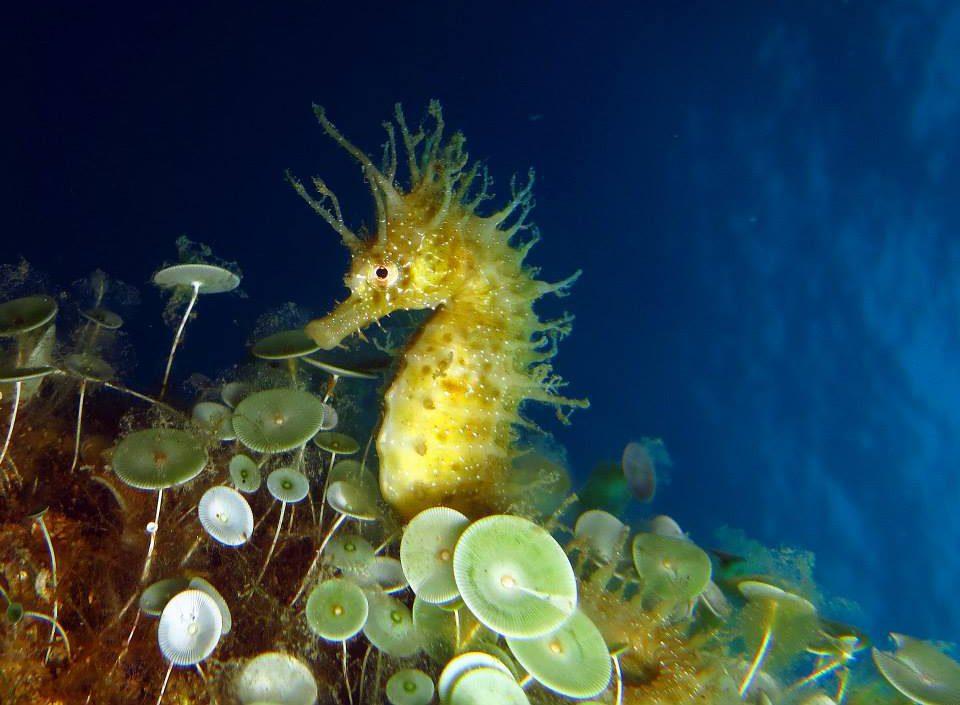 Costa Brava Discover Scuba Diving experience in Spain