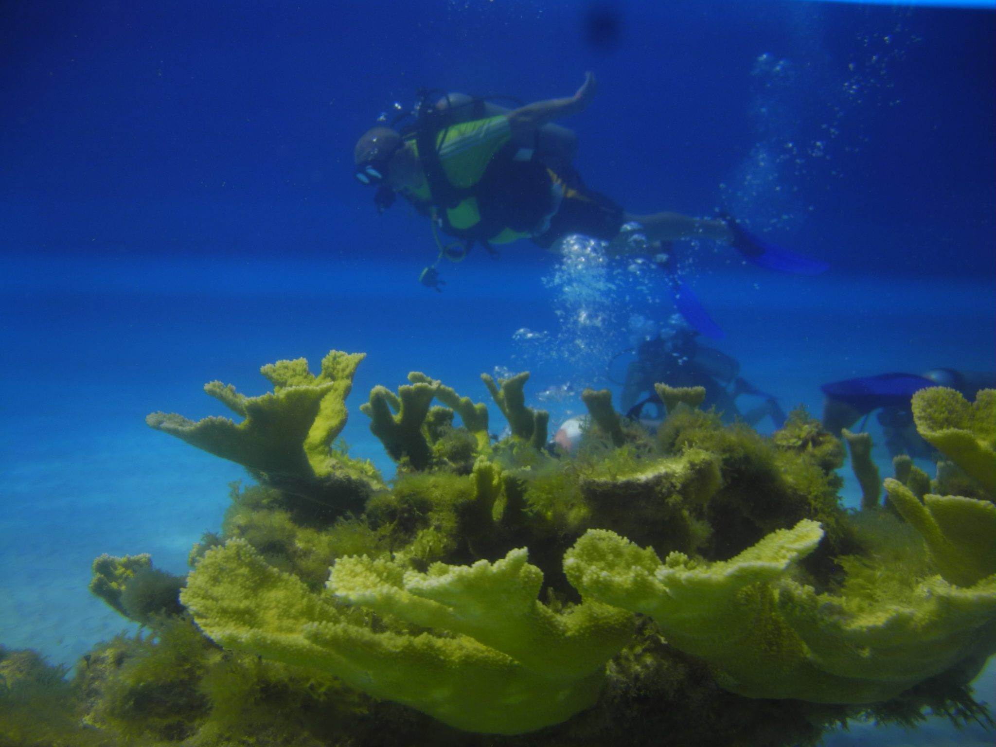Cancun night scuba diving experience in Mexico (One tank)