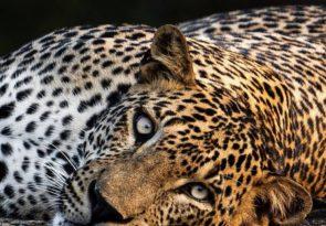 10 day Sri Lanka Wildlife Safari Holiday
