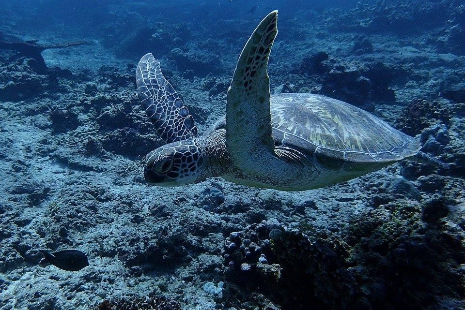 Advanced Adventurer scuba diving course in Nusa Penida