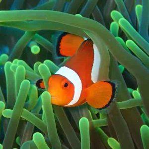 Discover Scuba Diving at Nusa Penida, Bali