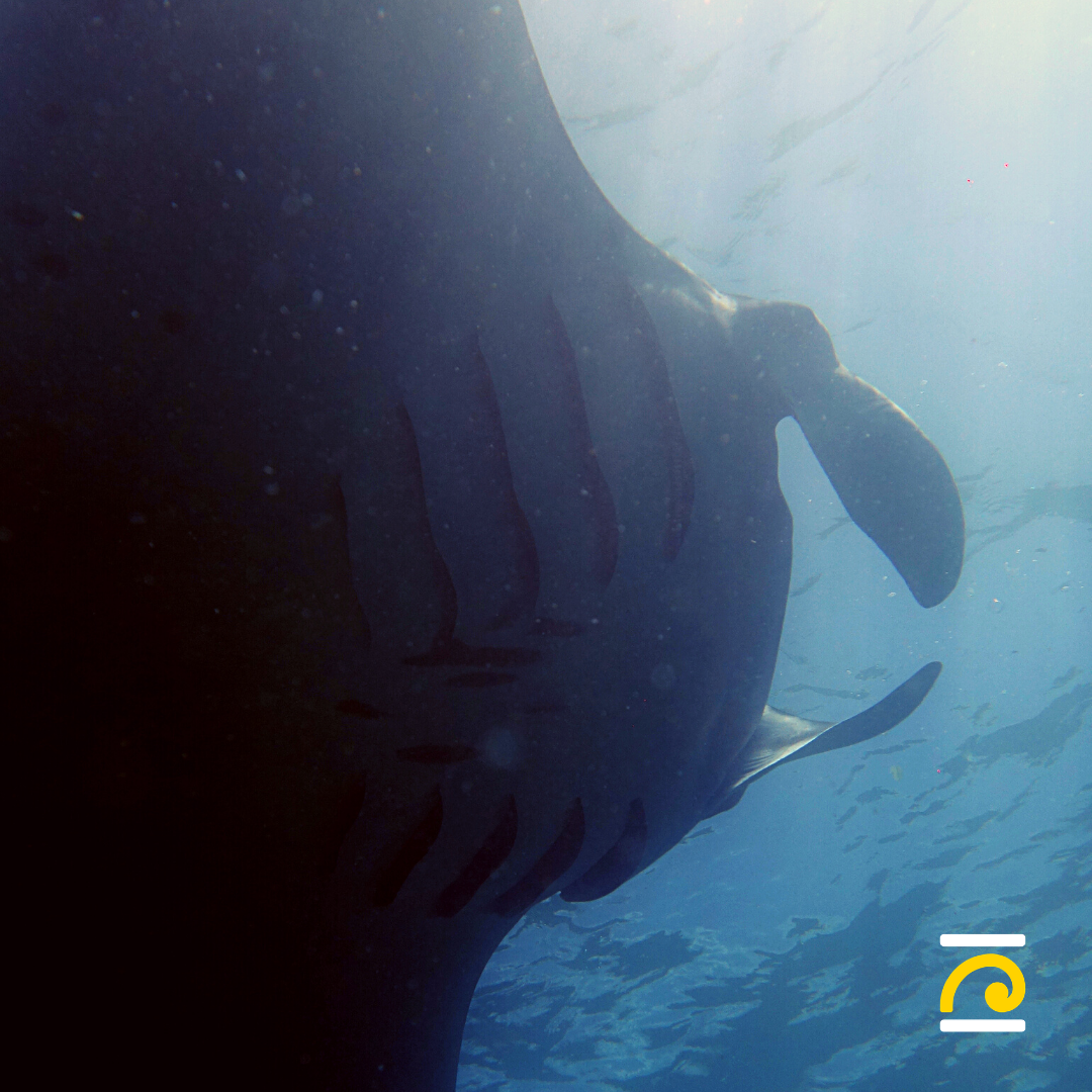 Basic Diver course: Discover scuba diving in Nusa Penida
