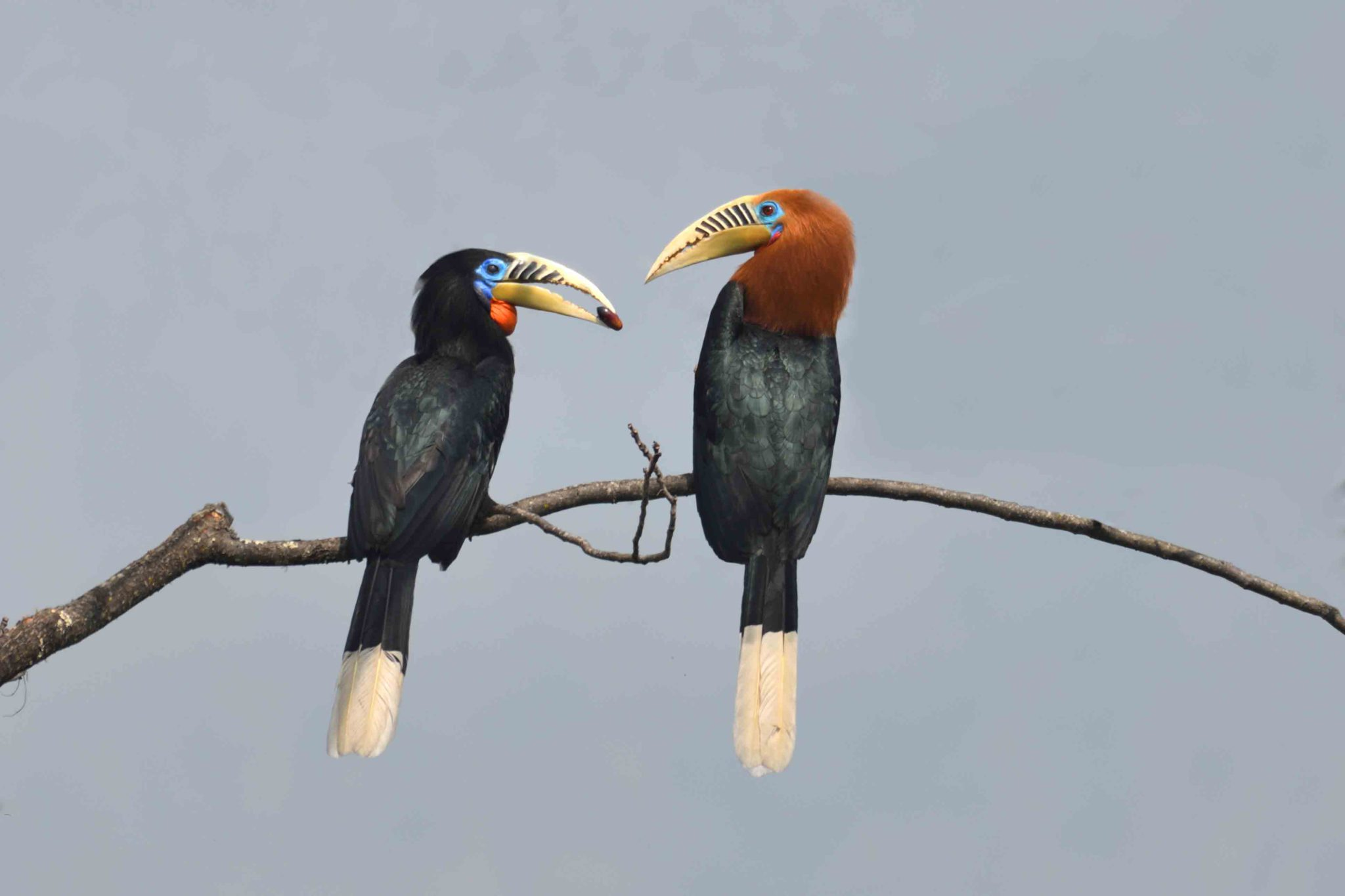 16 day culture tour and birding safari holiday in Bhutan