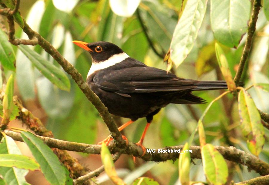 Nepal birding safari experience in Shivapuri Nagarjun Park
