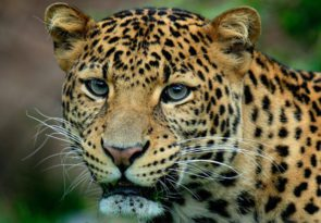 2 Day Sri Lanka Tour To Galle & Yala From Colombo