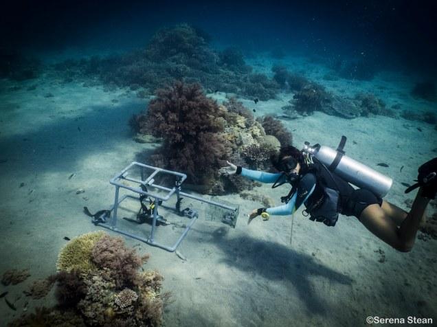 BRUV Station Nusa Penida scuba diving photo by Serena Stean of Reeflex Divers