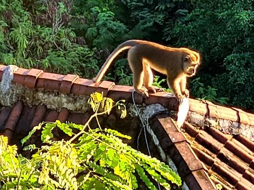 Macabre Monkey Nusa Penida Photo by Cara Rees