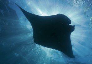 Nusa Penida Stress and Rescue Diver course in Indonesia
