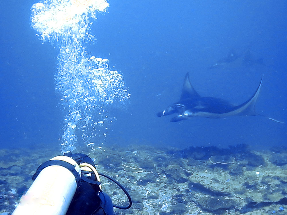 Week 3 of Indo Ocean Project Review of Reeflex divemaster course