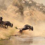 3 Day Masai Mara Lodge Africa Safari in Kenya